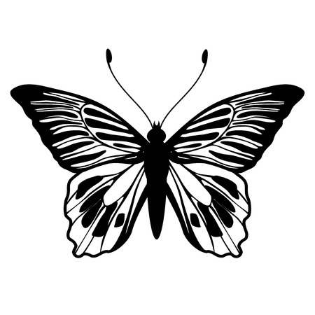 Vector Illustration of detailed butterfly silhouette. Vector