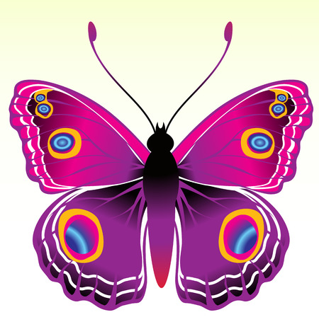 candid: Vector Illustration of detailed Brightly coloured butterfly.
