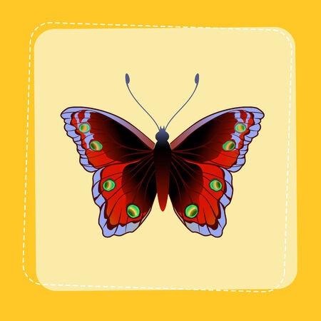 Vector Illustration of detailed Brightly coloured butterfly on funky yellow frame. Vector