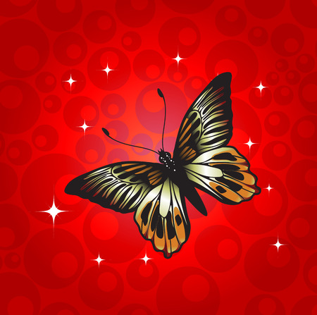 Vector Illustration of detailed Brightly coloured butterfly on the funky red background. Vector