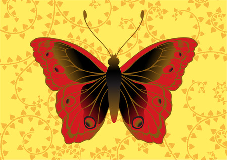Vector Illustration of detailed Brightly coloured butterfly on the funky yellow background. Vector