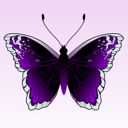 Vector Illustration of detailed Brightly coloured butterfly.