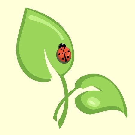 Vector illustration of  ladybug sitting on the green leaf  Vector