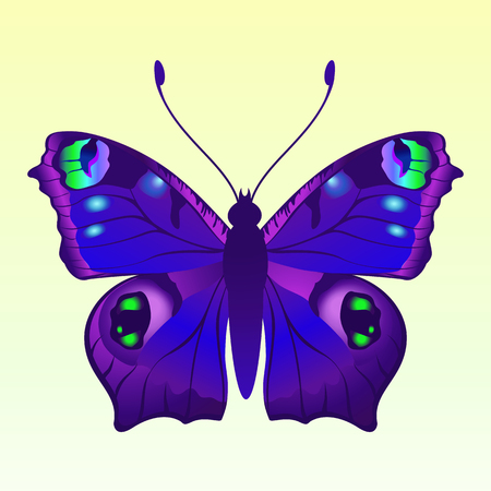 feeler: Illustration of detailed Brightly coloured butterfly. Illustration