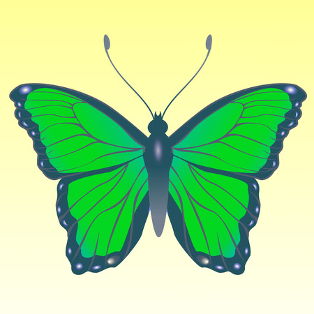 lepidoptera:  Illustration of detailed Brightly coloured butterfly.