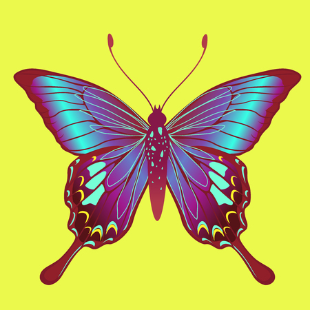 Illustration of detailed Brightly coloured butterfly. Vector