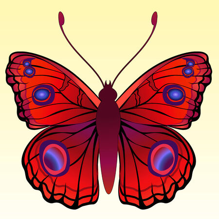 peacock butterfly:  Illustration of detailed Brightly coloured butterfly.
