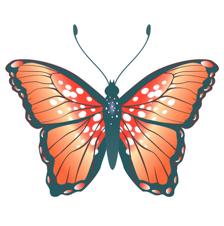 peacock butterfly: Illustration of detailed Brightly coloured butterfly. Illustration