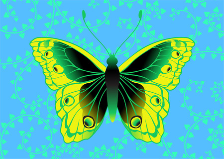 Illustration of detailed Brightly coloured butterfly on the funky blue background. Vector