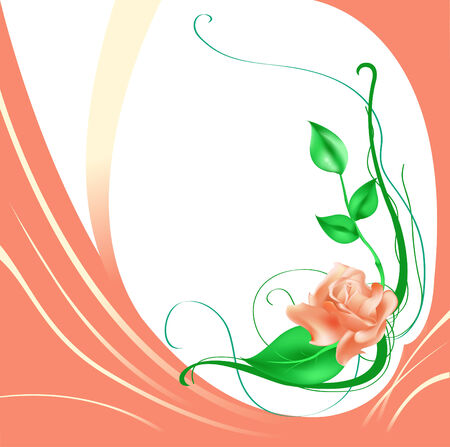 rose bush:  illustration of elegant beautiful rose Illustration