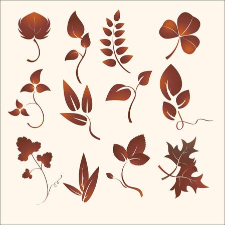 field maple:   illustration set of design plants silhouettes