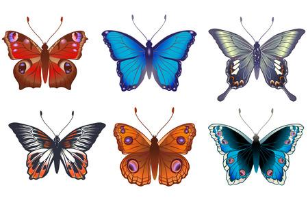 butterflies flying: Illustrazione vettoriale set di dettagliate farfalle dai colori vivaci.  Vettoriali
