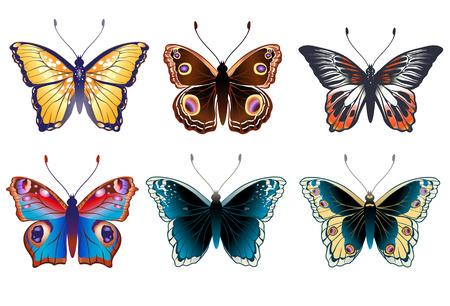 mariposas volando: Conjunto de ilustraci�n vectorial de mariposas de colores brillantes detalladas. Vectores
