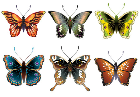tracery: Vector Illustration set of detailed Brightly coloured butterflies.