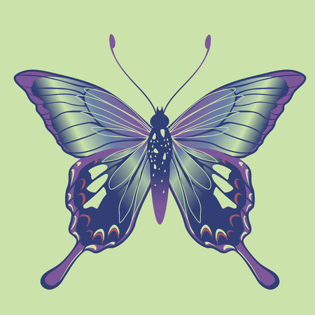 lepidoptera: Vector Illustration of detailed Brightly coloured butterfly.