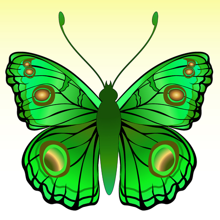 feeler: Vector Illustration of detailed Brightly coloured butterfly.