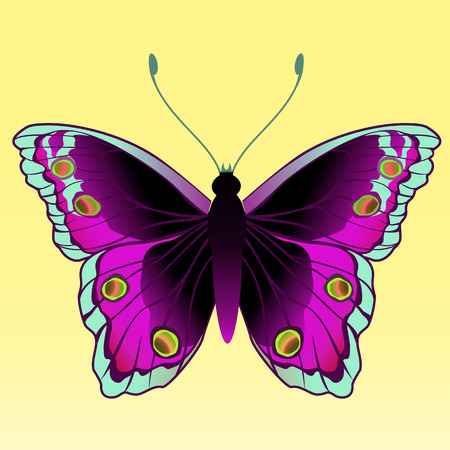 multi coloured: Vector Illustration of detailed Brightly coloured butterfly.