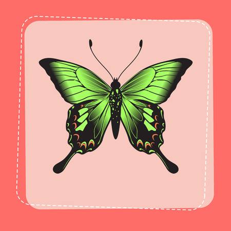 Vector Illustration of detailed Brightly coloured butterfly on funky pink frame. Vector