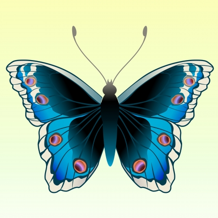 multi coloured: Illustration of detailed Brightly coloured butterfly