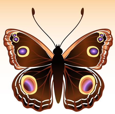 peacock butterfly: Illustration of detailed Brightly coloured butterfly