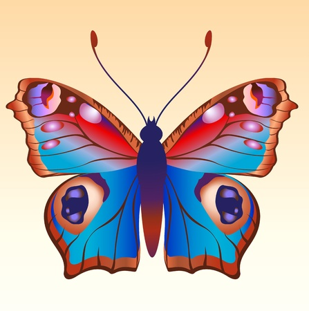 Illustration of detailed Brightly coloured butterfly