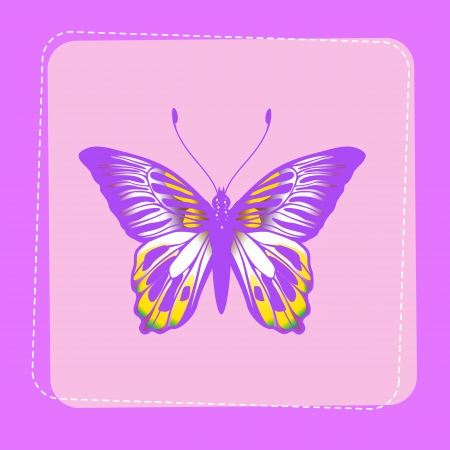 Illustration of detailed Brightly coloured butterfly on funky violet background  illustration