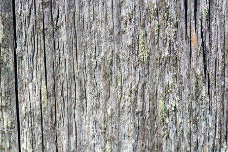 seamless: Wood texture. Wood texture for design and decoration. Stock Photo