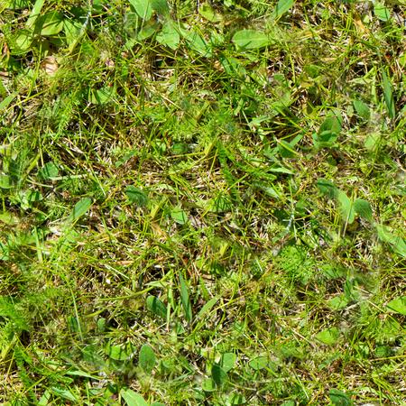 Fresh green grass moss floor garden texture background