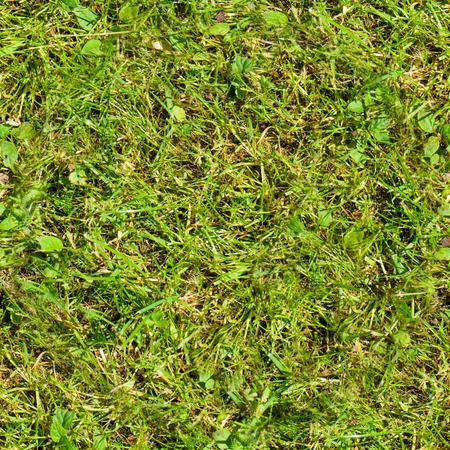 Seamless grass. Fresh green grass moss floor garden texture background Stok Fotoğraf