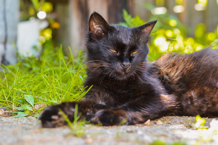 A black cat lies on the ground in the village