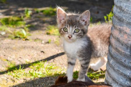 striped kitten in the village street cat.