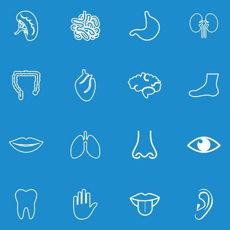 human anatomy icon vector design symbol