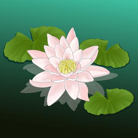 La flor del lirio de agua
