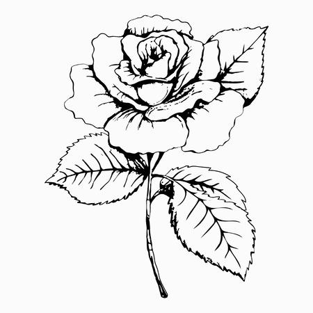 Flower Rose, schets, het schilderen. Hand tekenen. Witte knop, bloemblaadjes, stengel en bladeren. Monochroom, Zwart-wit afbeelding. Decoratief element, design element, basiselement van de inrichting, print, tattoo
