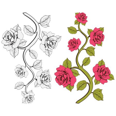 rosas rama de la flor. Conjunto de rosas rosadas y blancas ramas. Estampado floral. Ornamento con las rosas. Marco floral, tarjeta de la flor, frontera de las flores, la bandera, la decoración. Fondo floral del vector