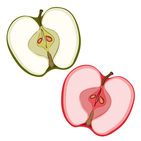 cutaway drawing: Slices of green and red apple Illustration