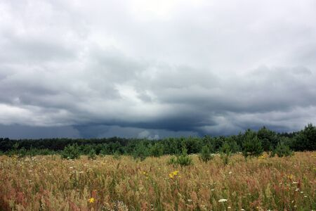 copse: Thunderclouds, forest and field, natural scenery. Nature before a storm