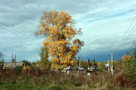 copse: Country autumn landscape. The big tree with yellow leaves, blue sky with clouds and farmhouses Stock Photo