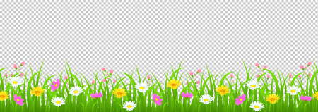 Flowers and grass border, yellow and white chamomile and delicate pink meadow flowers and green grass on transparent background, vector illustration, greeting card decoration element, graphic