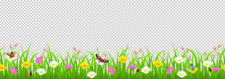 Flowers and grass border, yellow and white chamomile and delicate pink meadow flowers and green grass, butterflies and ladybug on transparent background