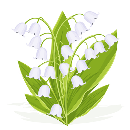 Lily of the valley, spring bouquet of delicate flower, vector illustration. White buds forest flowers bluebells, green stalks and leaves isolated on white background, botanical realistic flat drawing