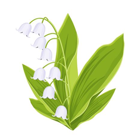 Maiglöckchen, Frühlingsstrauß zarter Blumen, Vektorillustration. Weiße Knospenwaldblumen Glockenblumen, grüne Stiele und Blätter einzeln auf weißem Hintergrund, botanische realistische flache Zeichnung Vektorgrafik