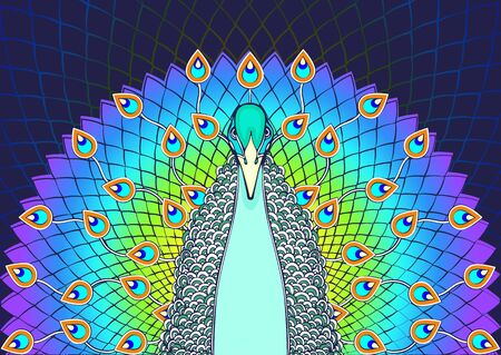Peacock with flowing tail colorful cartoon drawing, front view. Beautiful multicolor bird with big open rainbow tail with peacock bright feathers, isolated on dark background. Vector illustration