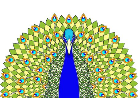 Beautiful blue green bird with big open tail with peacock bright feathers, isolated on white