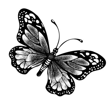 Ink butterfly hand drawing, doodle insect sketch, monochrome, print, tattoo. Painted in black inky graphic butterfly spread wings top view isolated on white background. Vector illustration 矢量图像