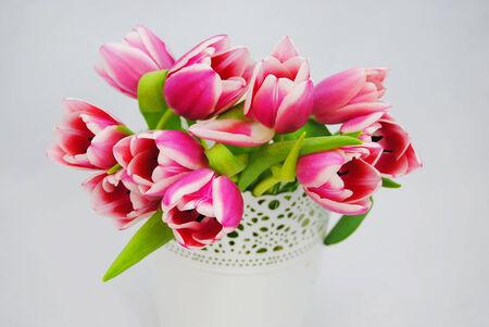 Mooie roze tulpen Stockfoto - 27206695