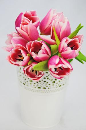 Mooie roze tulpen Stockfoto - 27206732