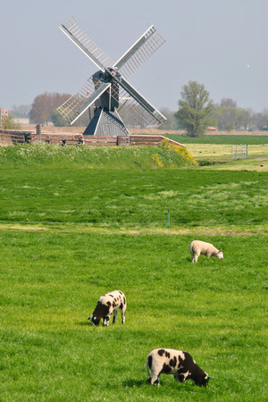 Dutch landscape near the bicycle path photo