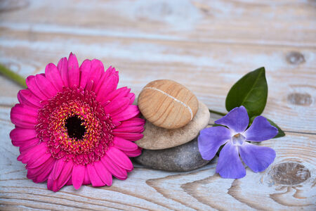 balance symbolic: Three zen stones on bamboo decorated with pink daisy flower