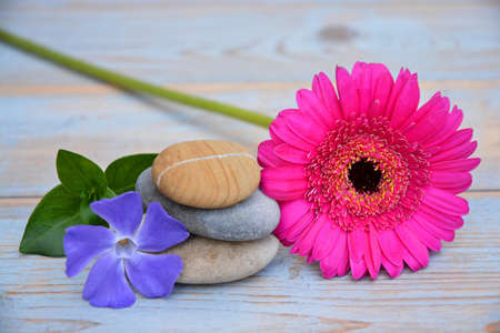 balance symbolic: Three zen stones on old wood decorated with pink daisy flower